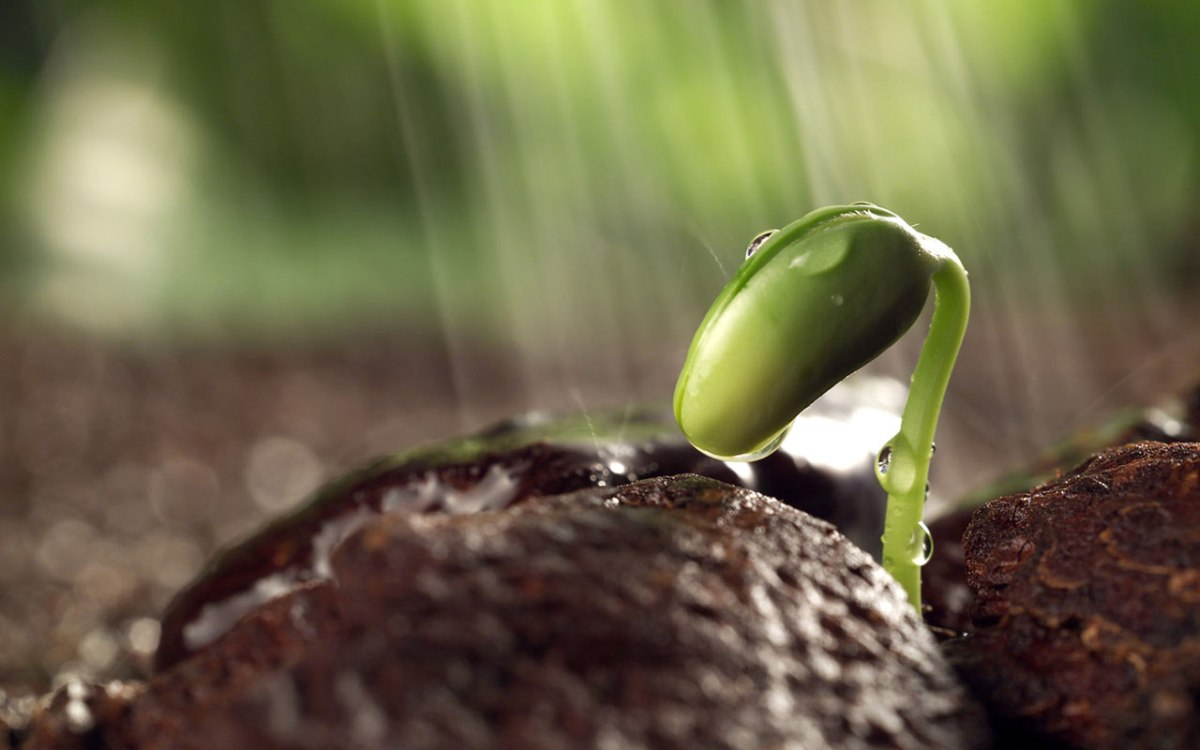 You are the Seed for your Future